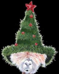 Gilpin Alpaca Hoshi